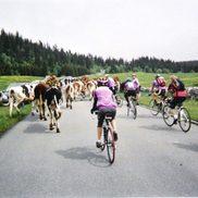Bourse aux vélos à Rumilly