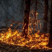 Haute-Savoie : Vigilance aux feux de broussailles.